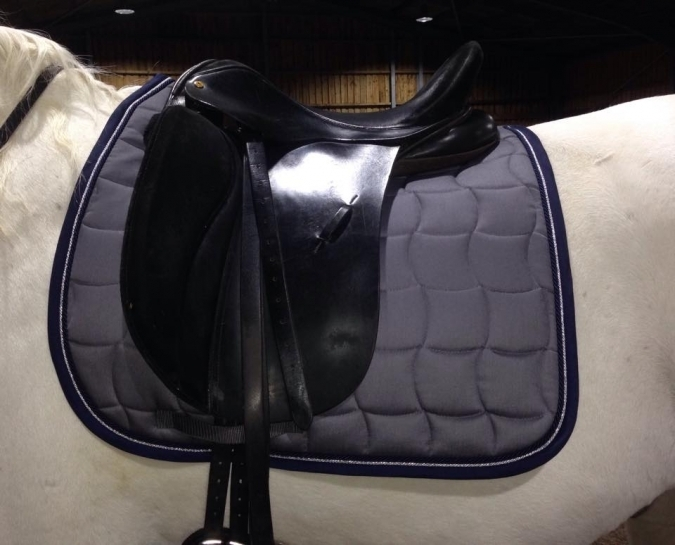 esp-dressage-grey.jpg